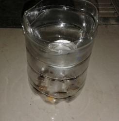 Cara Membuat Perangkap Kecoa Sederhana - CariCaranya (5)